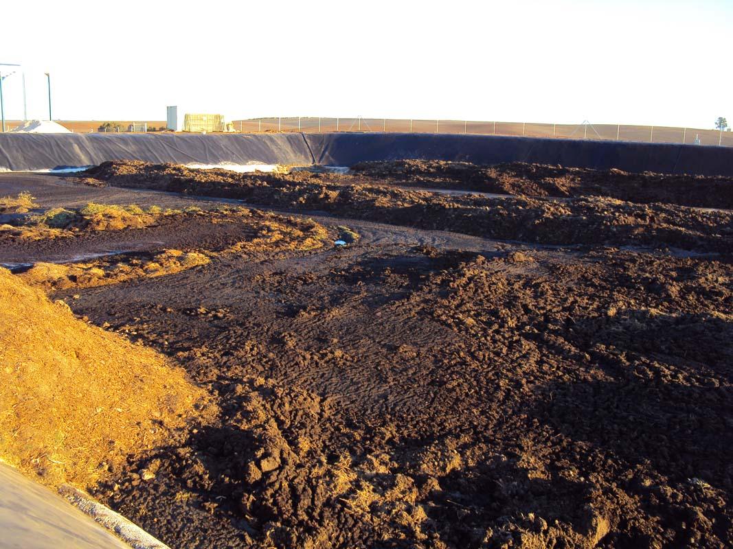 planta-compost3